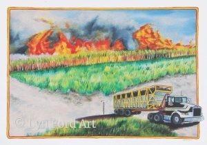Cane Fire, Rural Australia, NSW